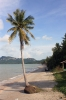 travel, thailand, surat thani,don sak