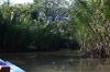thailand_tapi_river_surat_thani_12