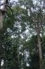 thailand_wat_suan_mokkh_1756
