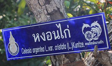Thailand, Ban Nang Kam, Eco Walk