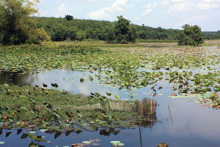 Thailand Nong Thung Tong Reservoir Surat Thani