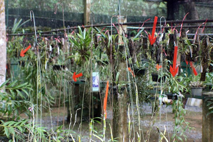 8495_thailand_khao_lak_orchid_garden_5276