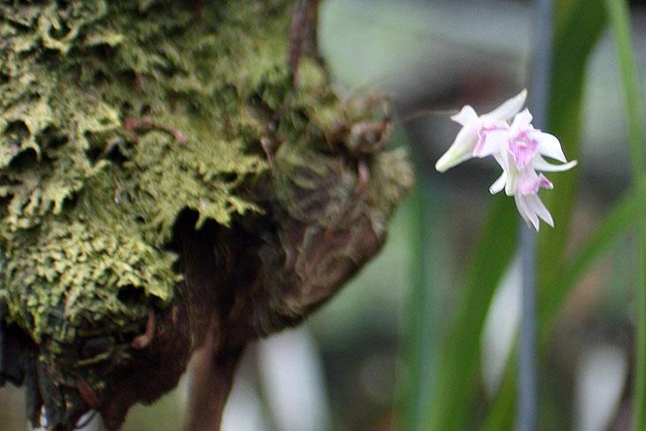 thailand, khao lak, orchid garden