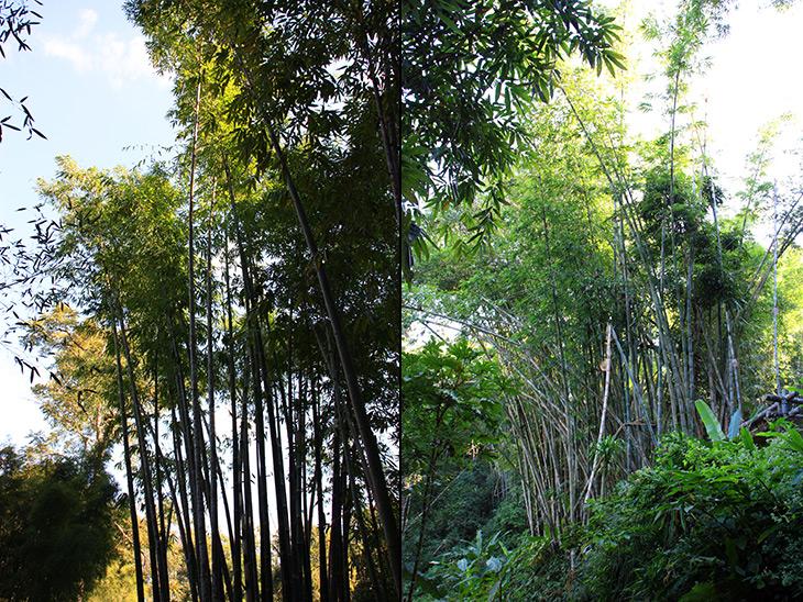Pang Tong Palace Bamboo Complex