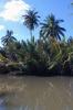 thailand_tapi_river_surat_thani_10
