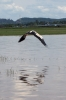 Travel, Thailand, Thale Noi, Waterfowl