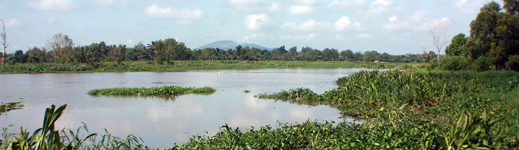 Khun Thale Swamp, Surat Thani, Thailand
